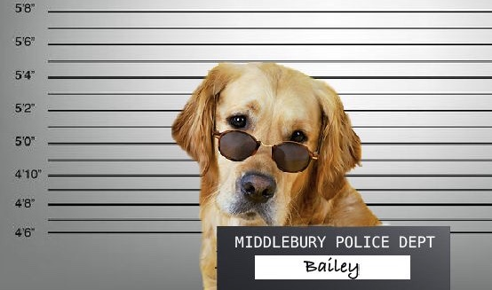 Middlebury Therapy Dog Arrested For Selling Xanax